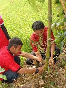 Penanaman Pohon Pada saat acara STMIK Tasikmalaya Go Green 2013